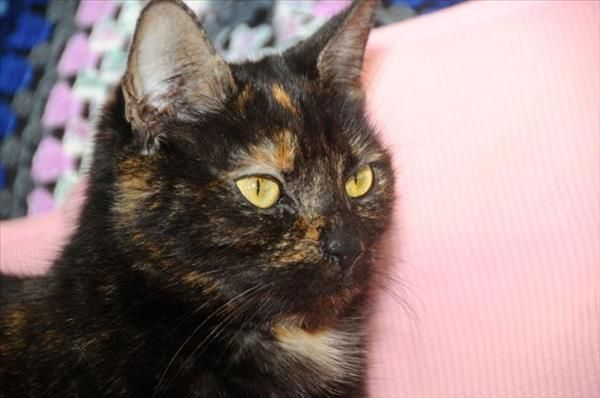 Meet Lilly at Petbarn Windsor. She's one of our long term