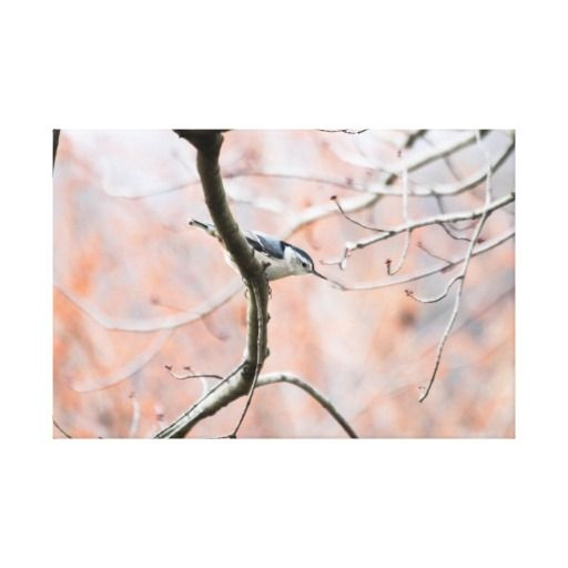 Nuthatch in Winter Wildlife Bird Canvas