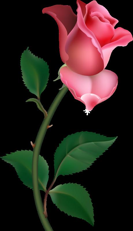 0 Png Flowers Dessin Fleur Fleurs Peinture Fleurs