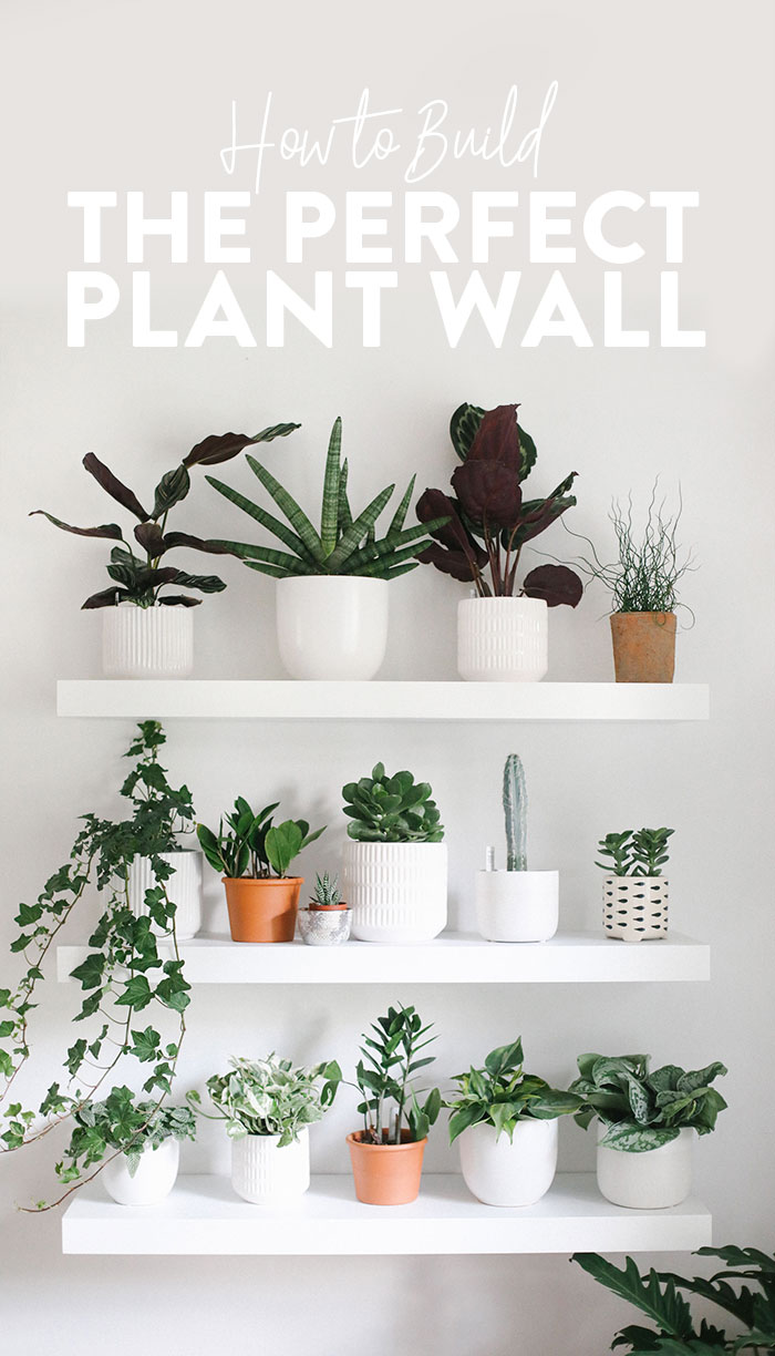 Looking to build a gorgeous, oxygen-filled plant wall in your home? This guide will teach you exactly how to do it. From how to space your shelves, to what plants to buy, we'll give you a step by step in building yourself an indoor living wall! #plants #plantwall #houseplant