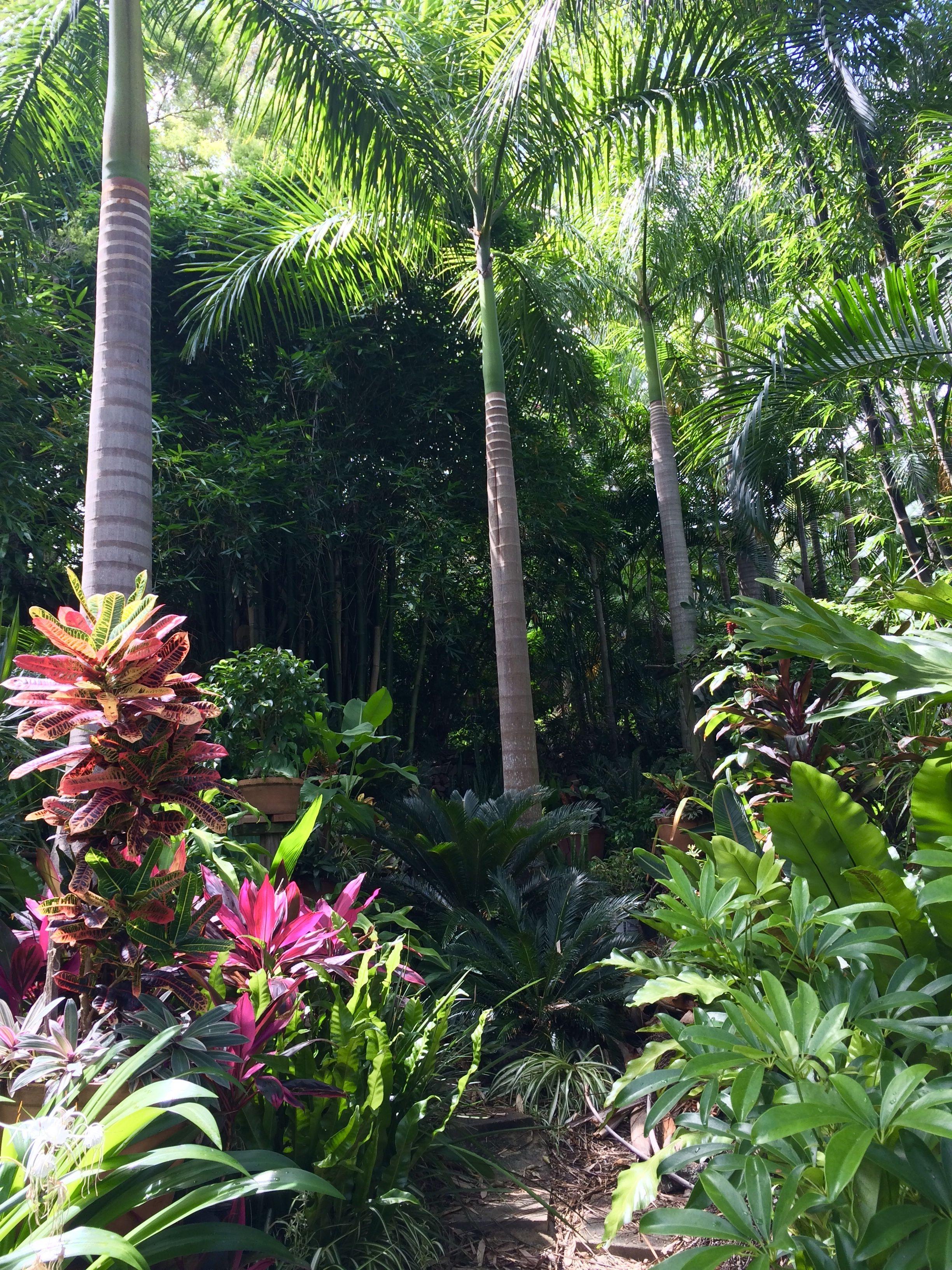 Bruce's tropical garden, Brisbane | foliage | Tropical ...