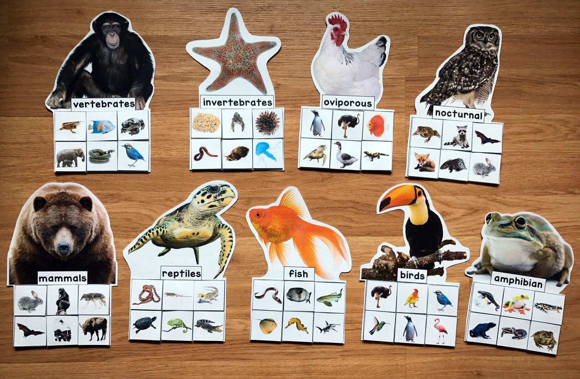 Animal Groups Sorting Mats W Real Photos