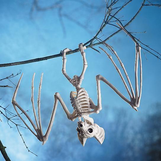 Skeleton Bat Skeletons, Bats and Halloween stuff