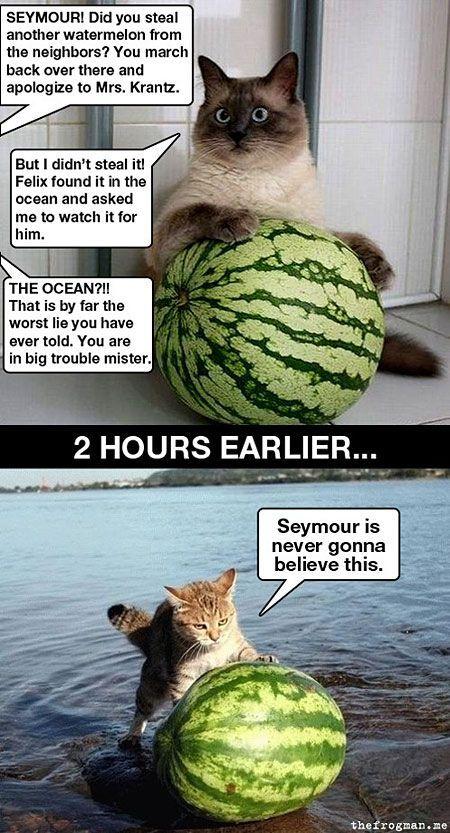 Funny watermelon cat cartoon