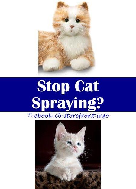 Sentry Foreclose To Blare  Pheromone Domestic cat Spray