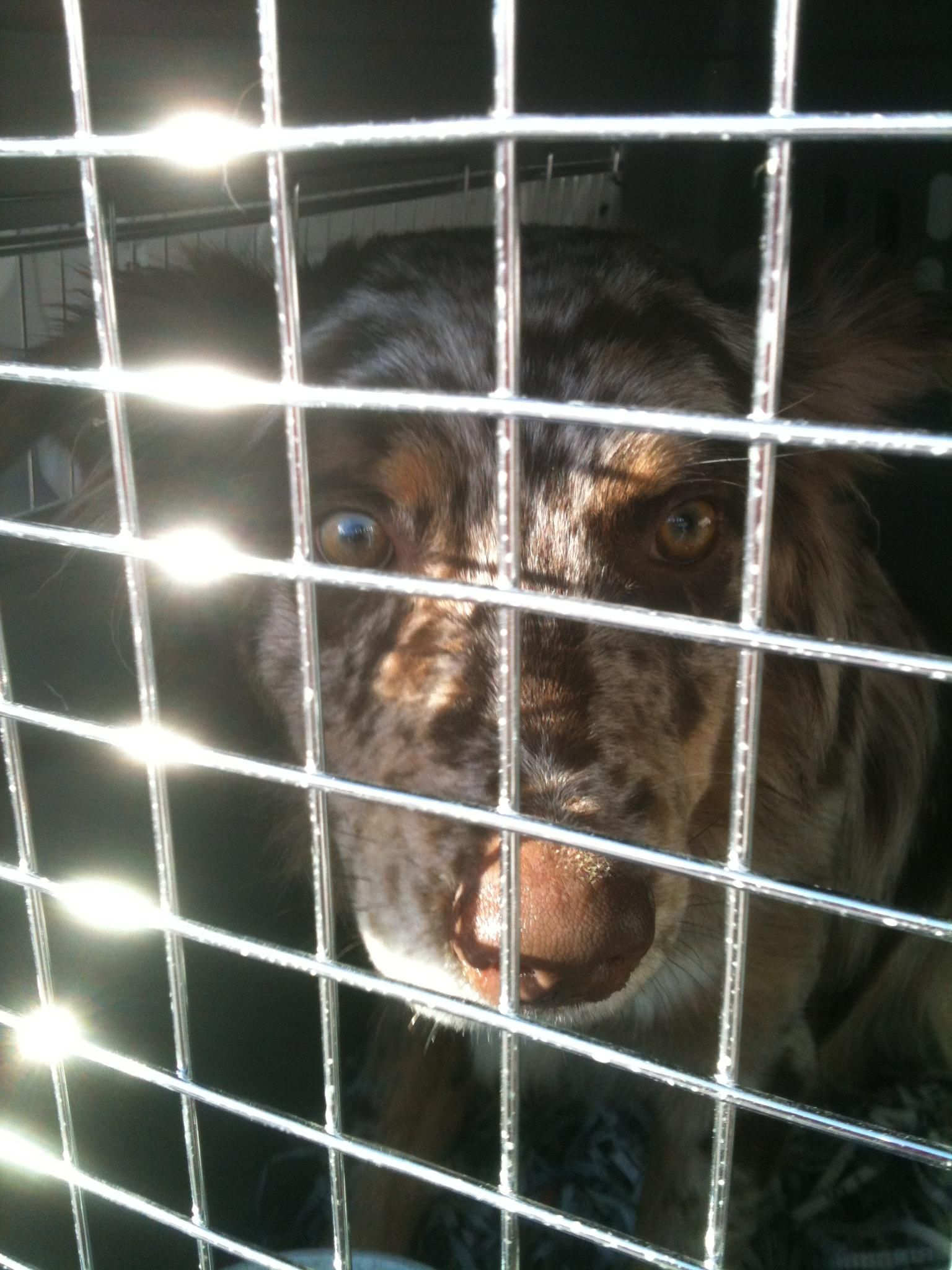 Airvets is a pet shipping, relocation, and transportation