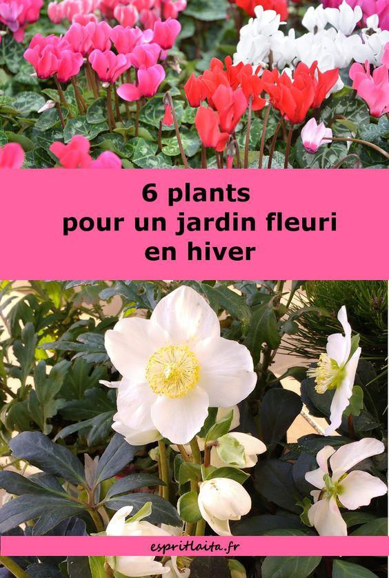 6 Plants Pour Un Jardin Fleuri En Hiver Esprit Laita Fleur Hiver Plante Hiver Plante Jardin