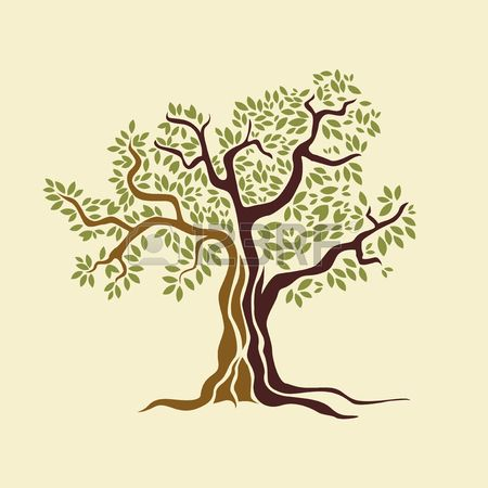 Olive Tree Vector Illustration Royalty Free Cliparts Vectors And