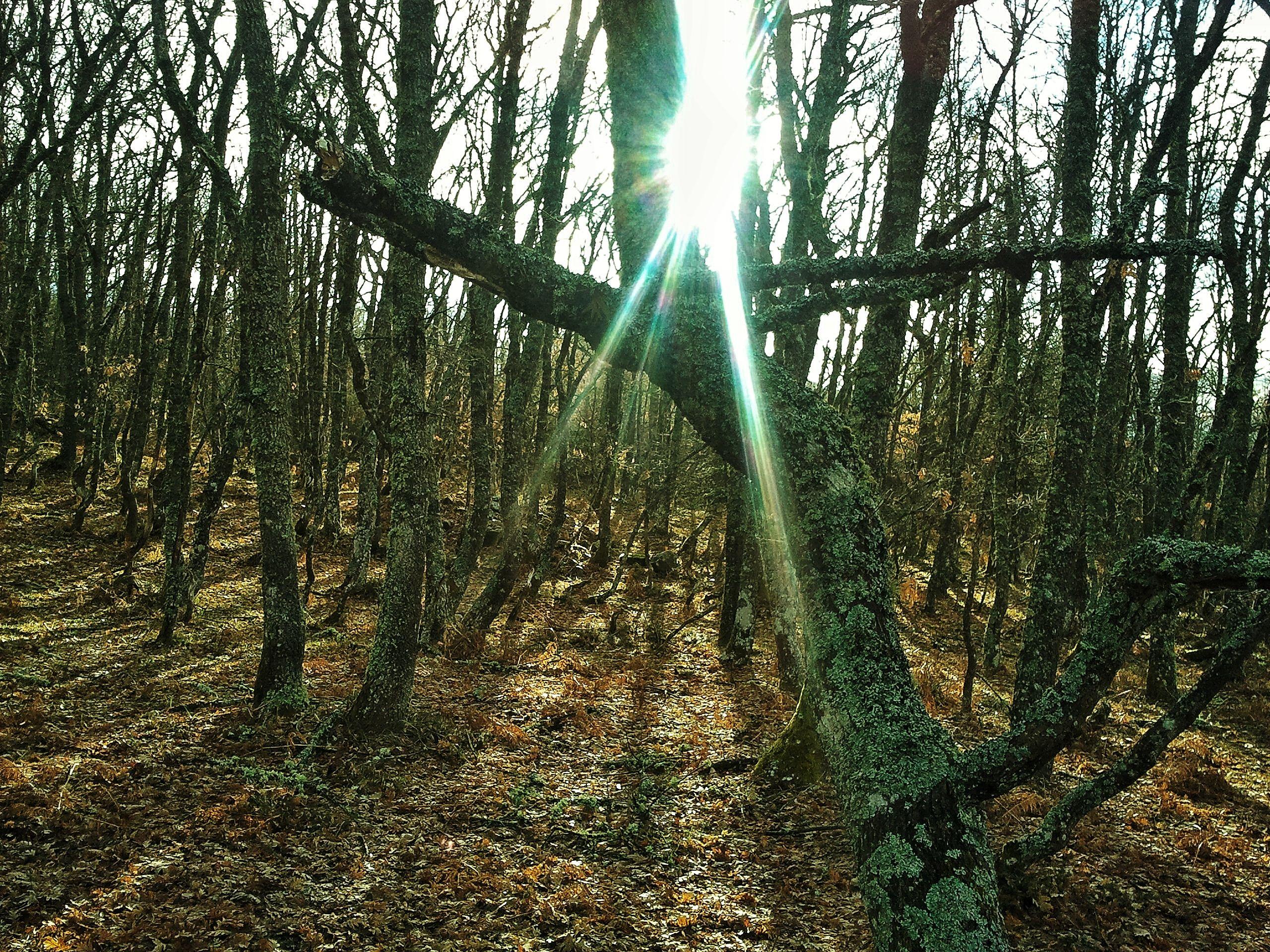 El Robledal Cantabria Cerca Del Pueblo Cántabro De Suances Es Posible Perderse Por Magníficos Robledales El Silencio Es La Tipos De Bosques Bosque Abedules