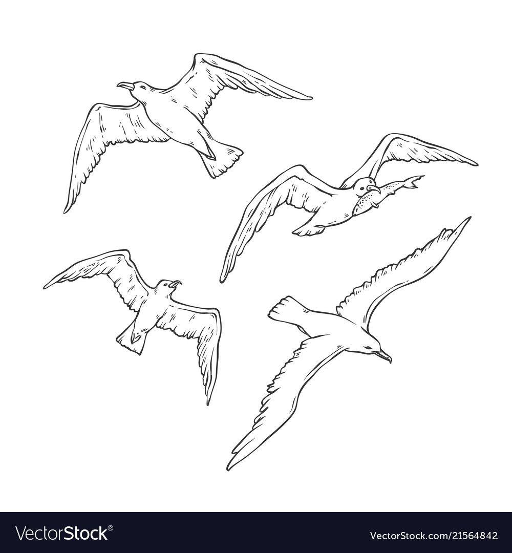 Sketch Set Flying Seagulls Bird Gull Royalty Free Vector Seagull Illustration Bird Sketch Vector Sketch