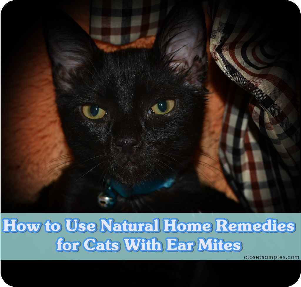 How to Use Natural Home Remedies for Cats With Ear Mites