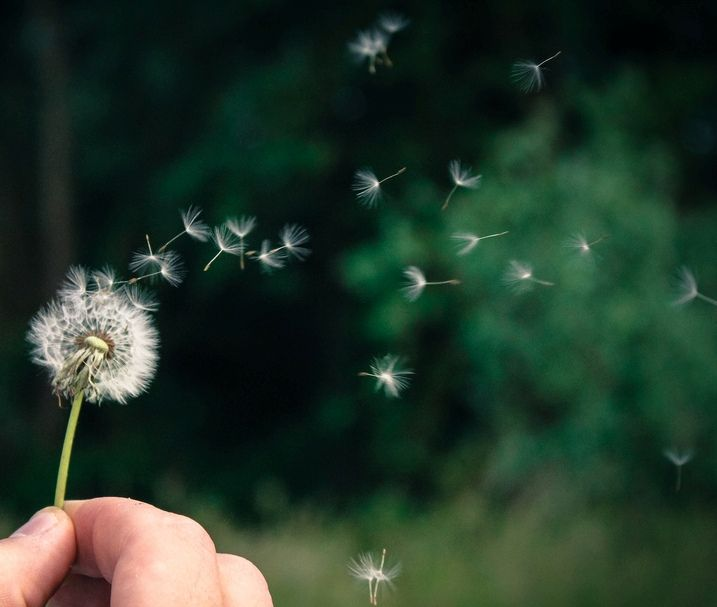 What the Dandelion has in common with the Army Brat