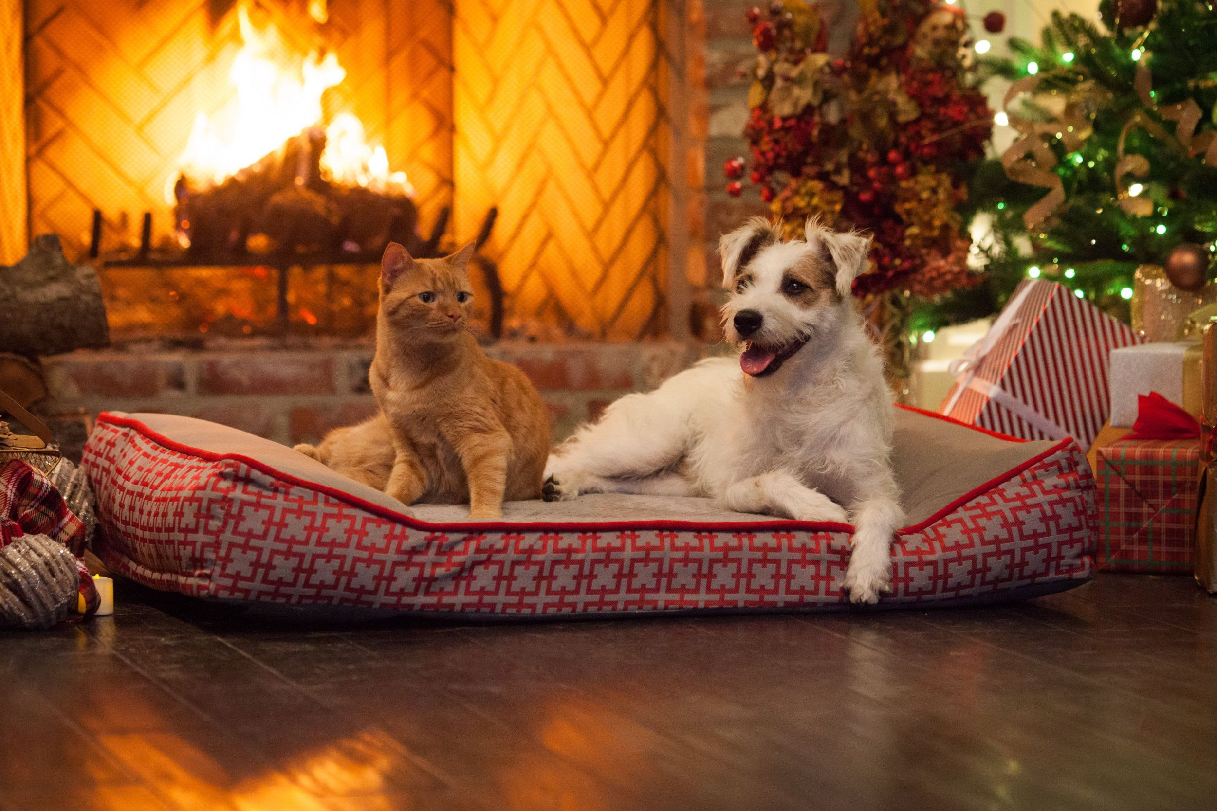 Check Out Happy The Cat And Happy The Dog In Front Of The Yule Log