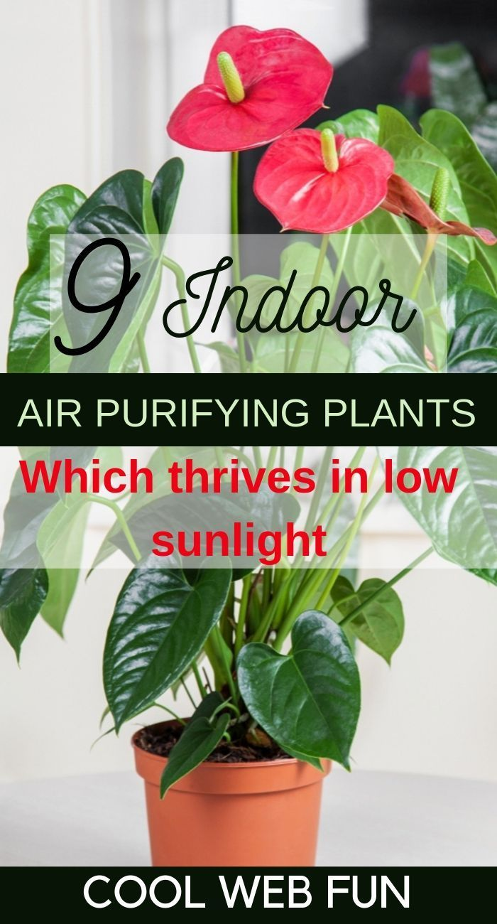 Air Purifying House Plants 9 Best Air Cleansing Plants