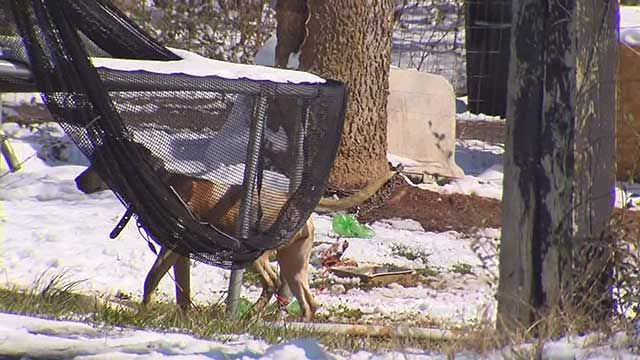 Two dogs tied up outside in the freezing temperatures have some residents in north Nashville concerned.