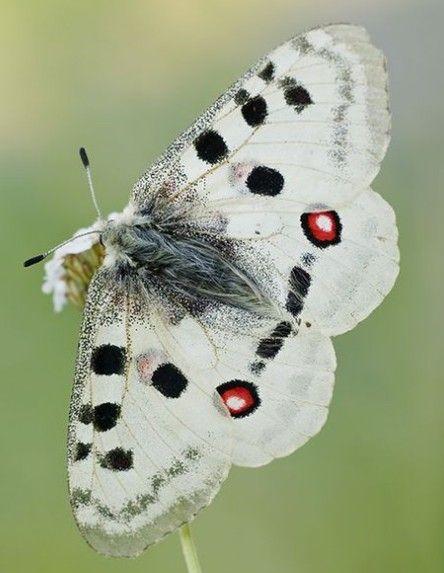 Moth おしゃれまとめの人気アイデア Pinterest 4d 蛾