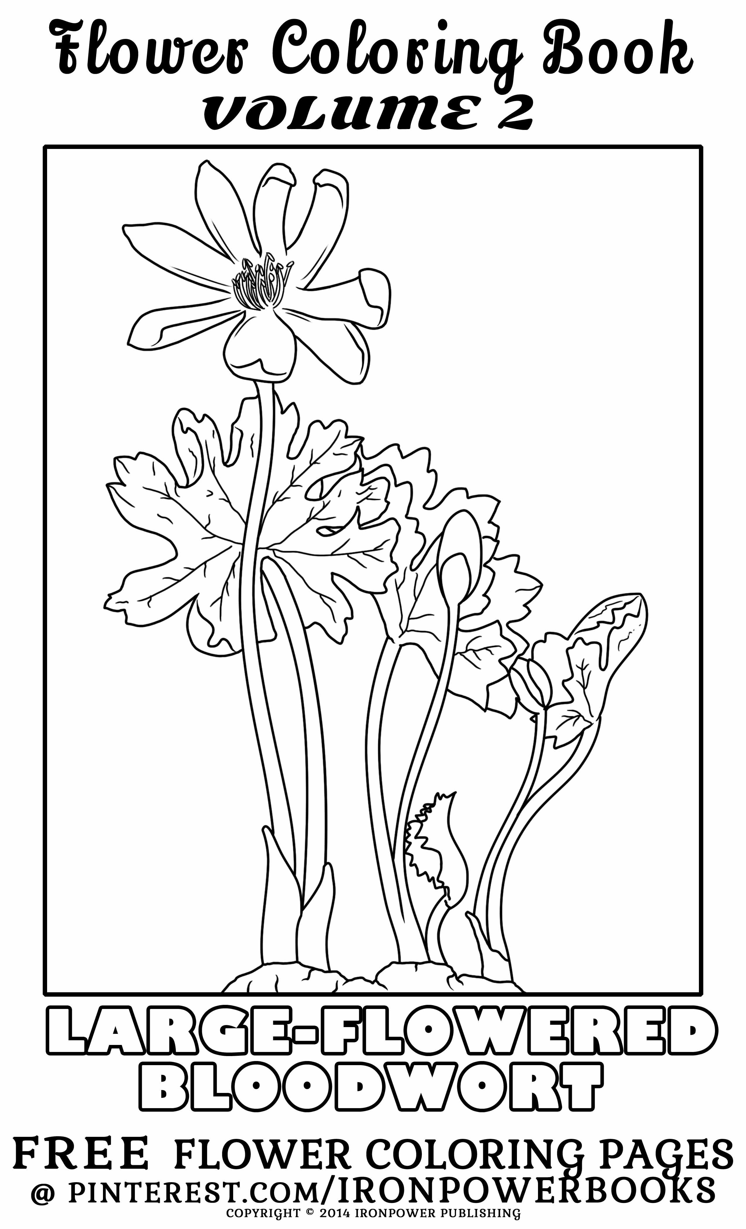 Free Flower Coloring Page From Flower Coloring Book Volume 2 Available At Http Www Amazon Com Botanical B Flower Coloring Pages Coloring Pages Coloring Books