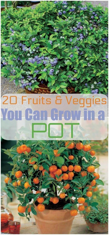 20 Obst & Gemüse, die in einem Topf angebaut werden können | Gemüsegarten | Einfache Opti...