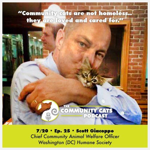 Interview Scott Giacoppo Chief Community Animal Welfare Officer Washington Dc Humane Society The Community Cats Podcast Podcasts Humane Society Welfare