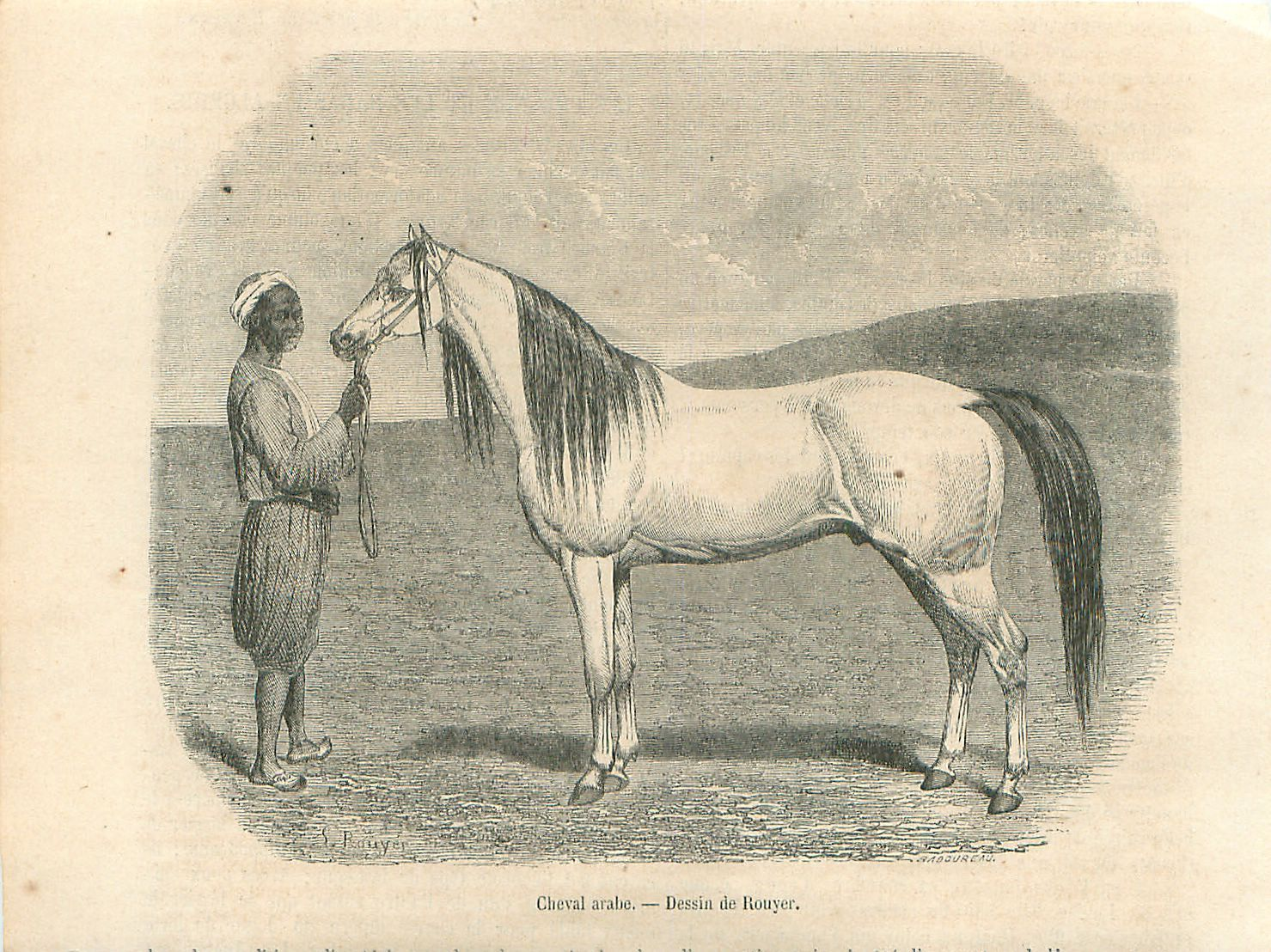 Cheval Arabe Pur-Sang PSA Arab Arabian Horse Rouyer GRAVURE ANTIQUE PRINT 1861
