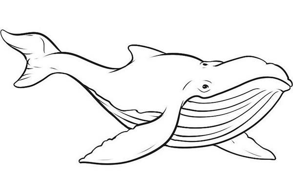 Picture of Blue Whale Coloring