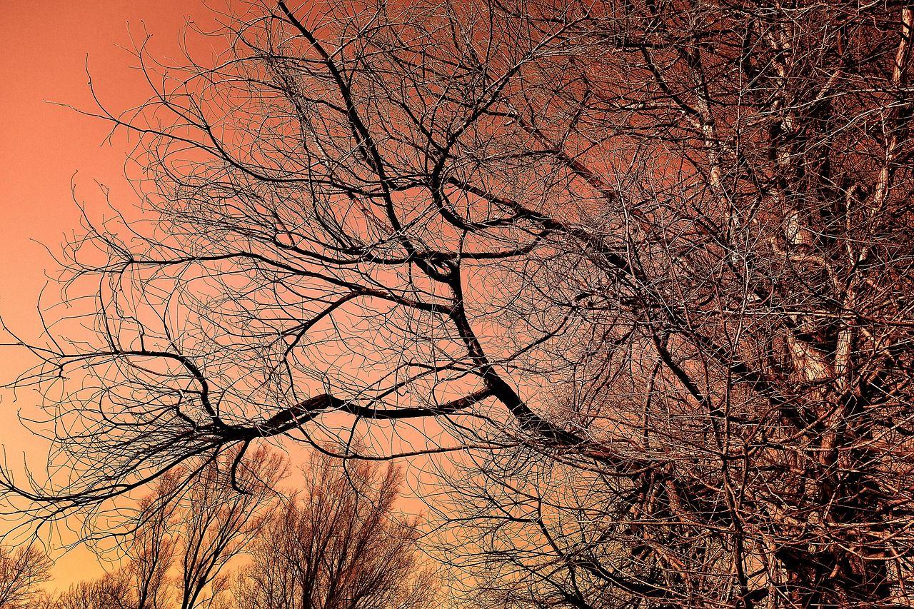 kostenloses bild auf pixabay - baum, baum oben, winter baum, zweig