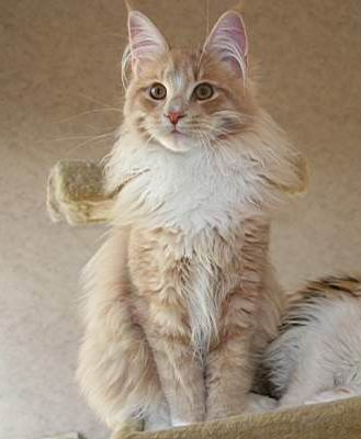 Pin On Favourite Cat Breeds