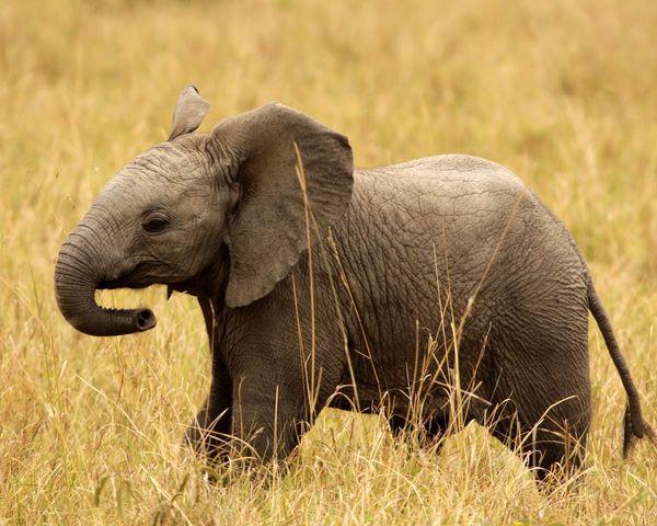 Animals in Tsavo, Kenya (wishing all wonderful weekend baby elephant) - a photo by elly holland