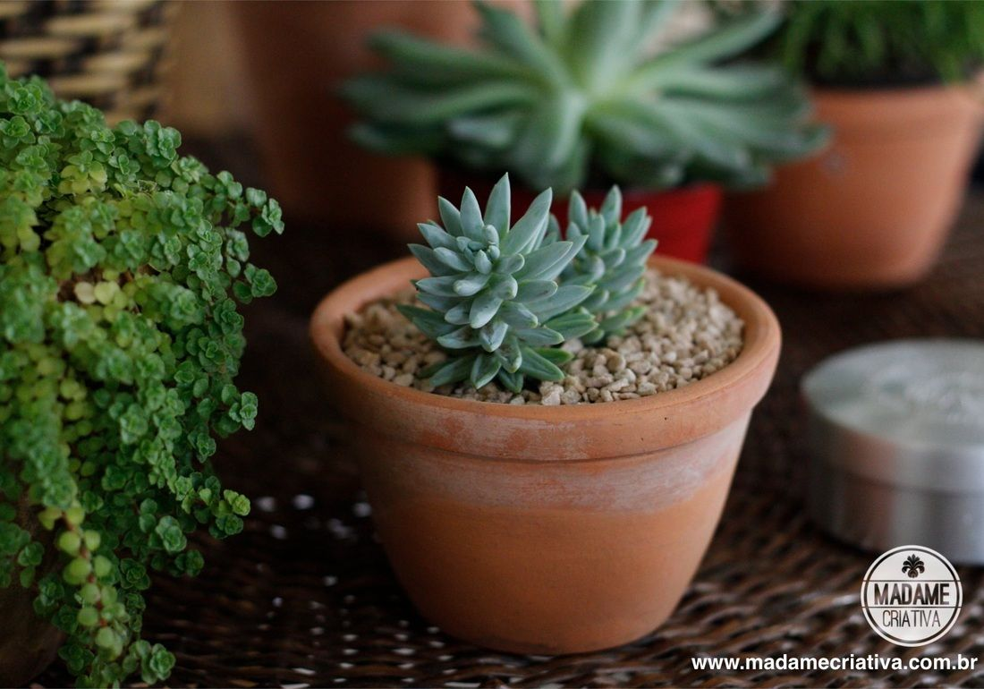 Como cultivar suculentas passo a passo com fotos how to for Como plantar cactus