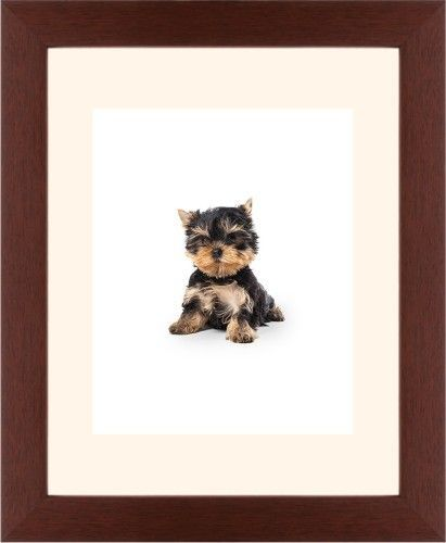 Terrier Puppy Framed Print, Brown, Contemporary, White, Cream, Single piece, 8 x 10 inches