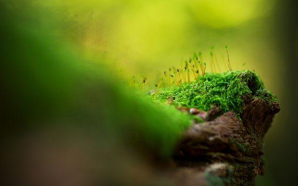 green nature tiltshift macro 1680x1050 wallpaper