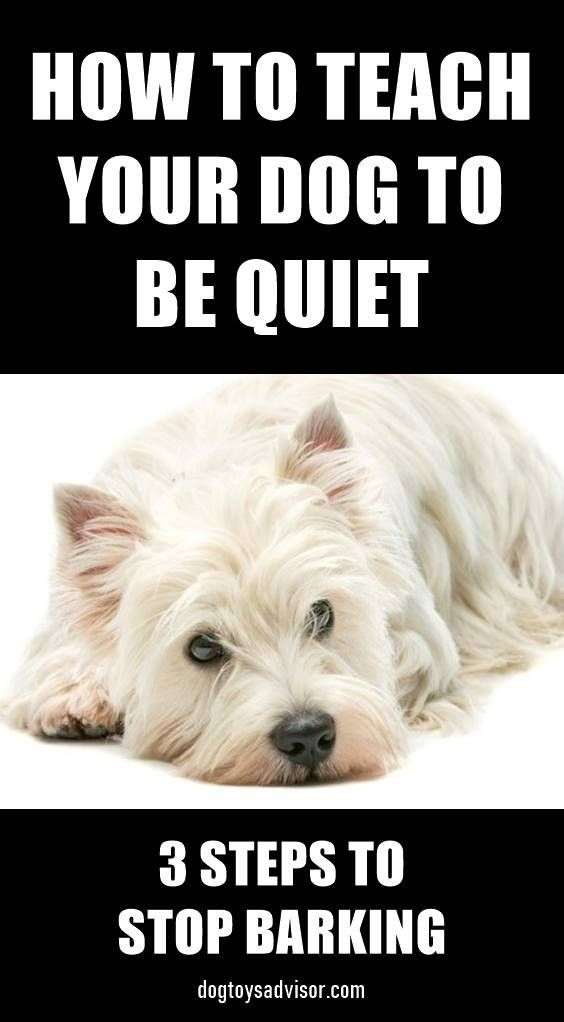 How To Teach Your Dog To Be Quiet How To Groom A Cavachon At