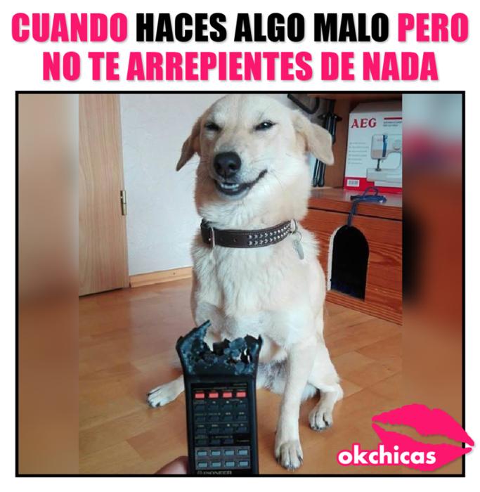 20 Divertidos Memes De Perros Que Te Haran Llorar De Risa Memes Divertidos Memes Perros Llorando De Risa