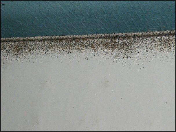 Bed Bugs And Foam Mattresses Bed Bugs Foam Mattress Kill Bed Bugs