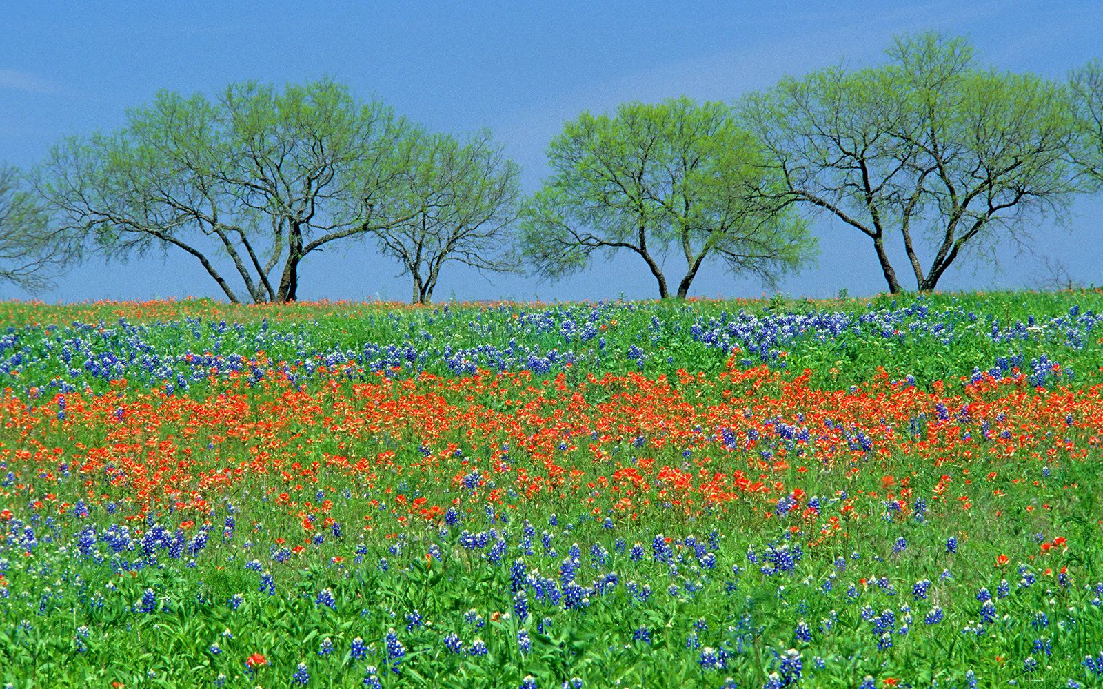 States Quiz Name The States Texas Hill Country Hill Country Landscape