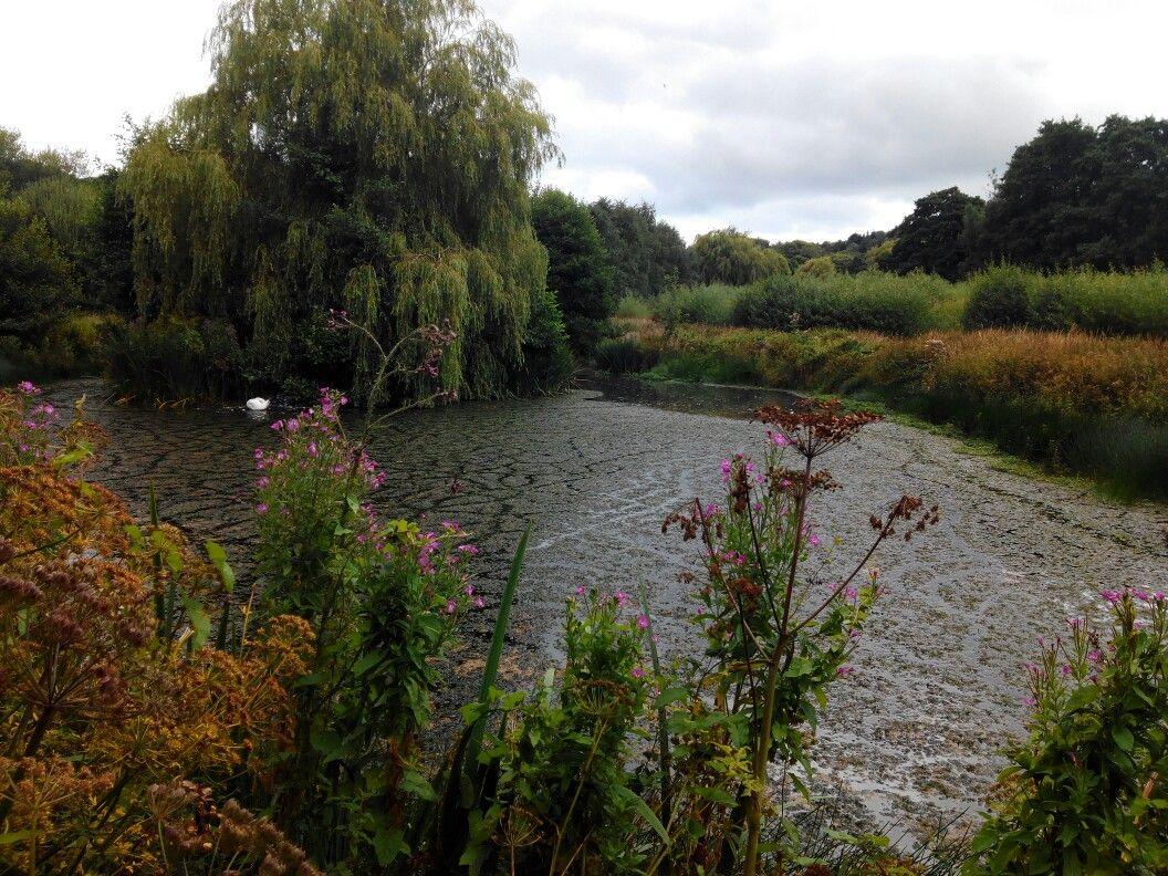 Pond (Trill Farm)