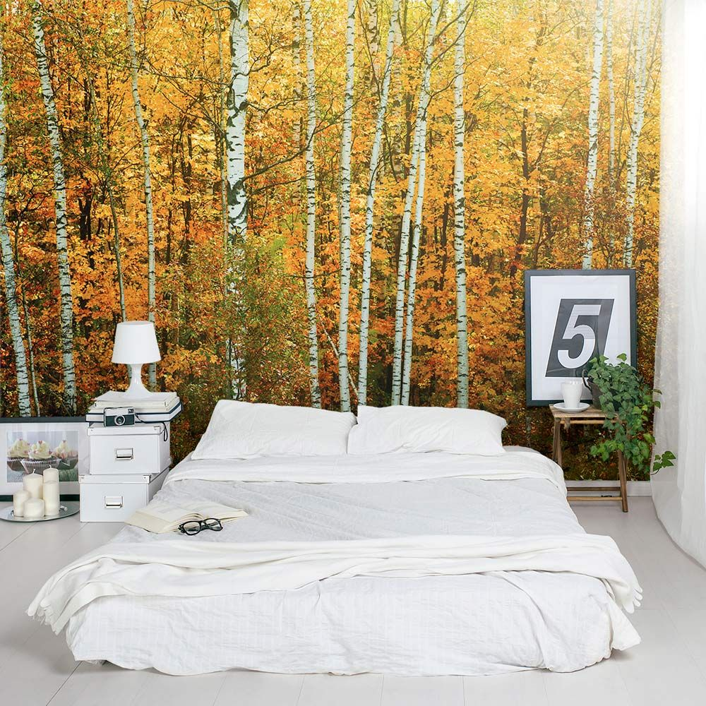 Awesome Autumn Birch Tree Forest Wall Mural #accentwall #naturemural  #removeablewallpaper