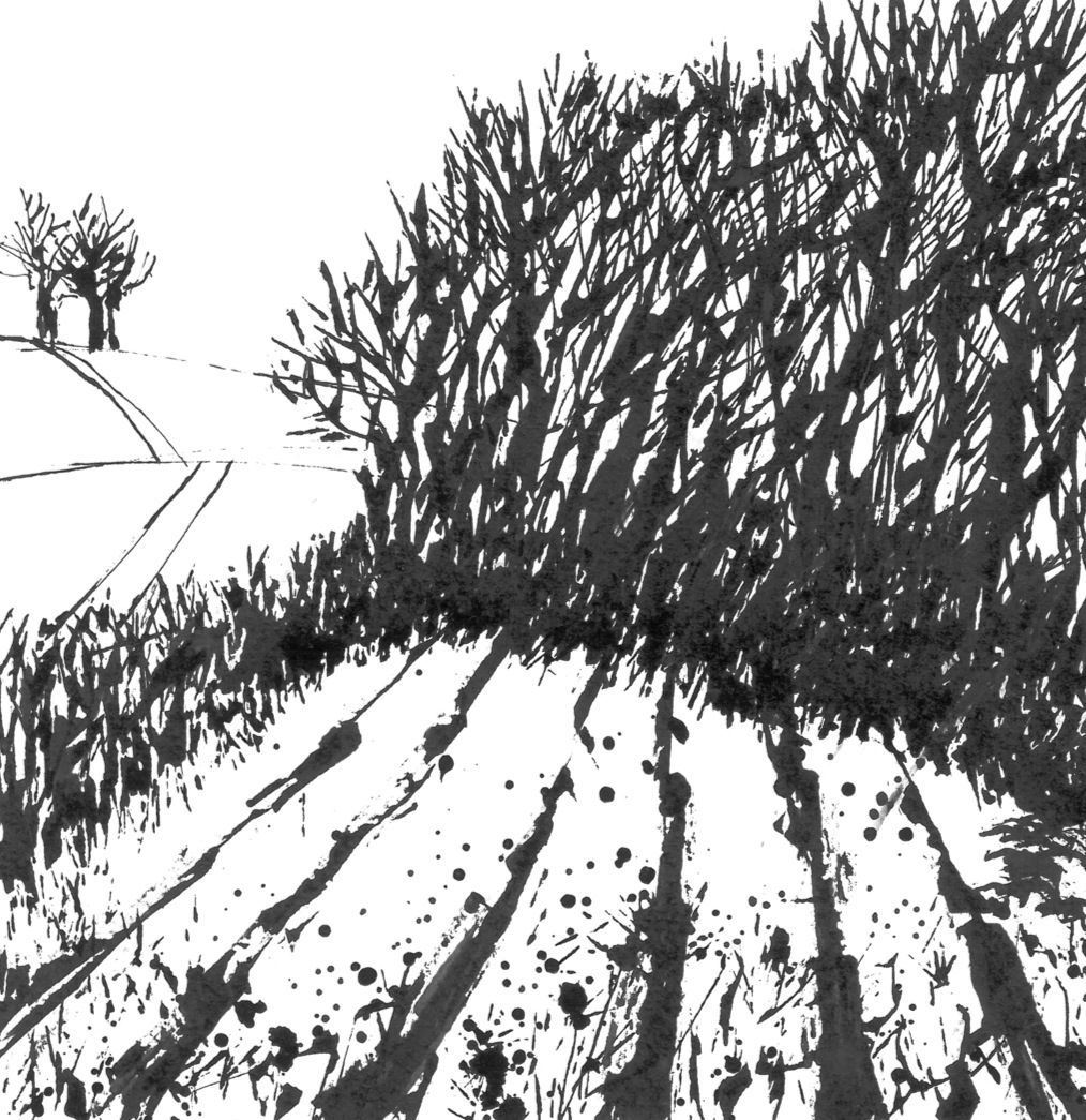 Copse And Ploughed Field Linley Indian Ink Dip Pen