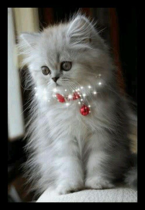 Images Of Animals For Christmas Animal Christmas Kittens Cutest Cute Cats Pretty Cats