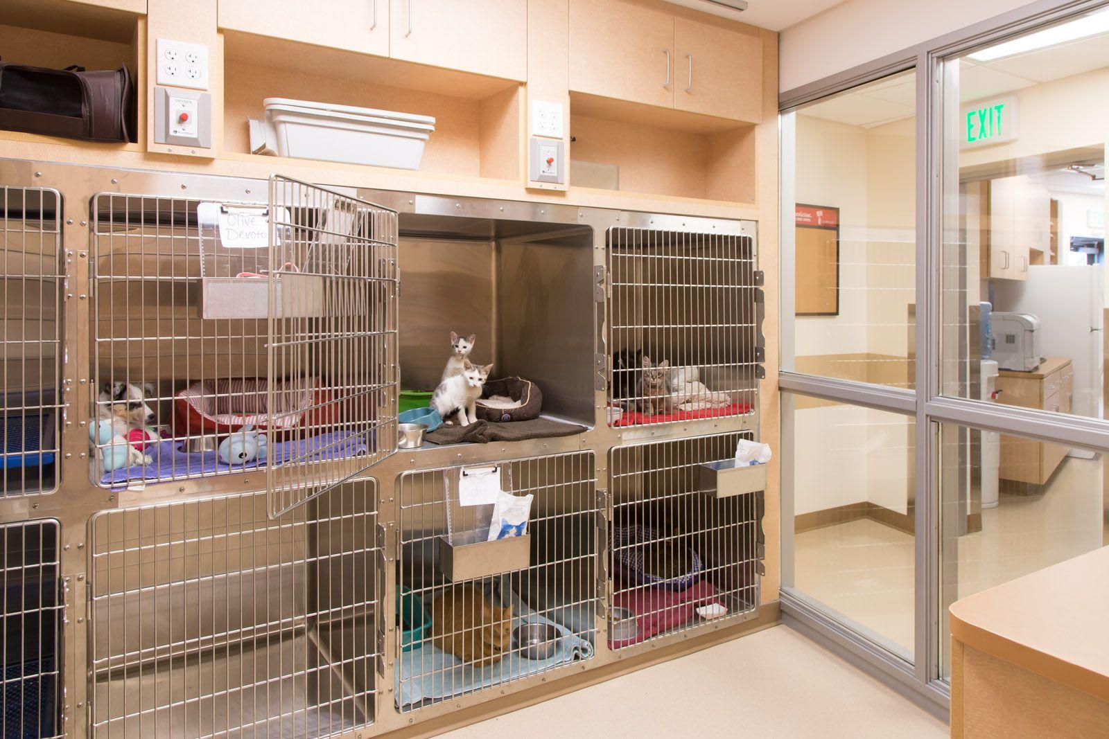 Cat ward. Storage of litter pans & cat carriers Pet