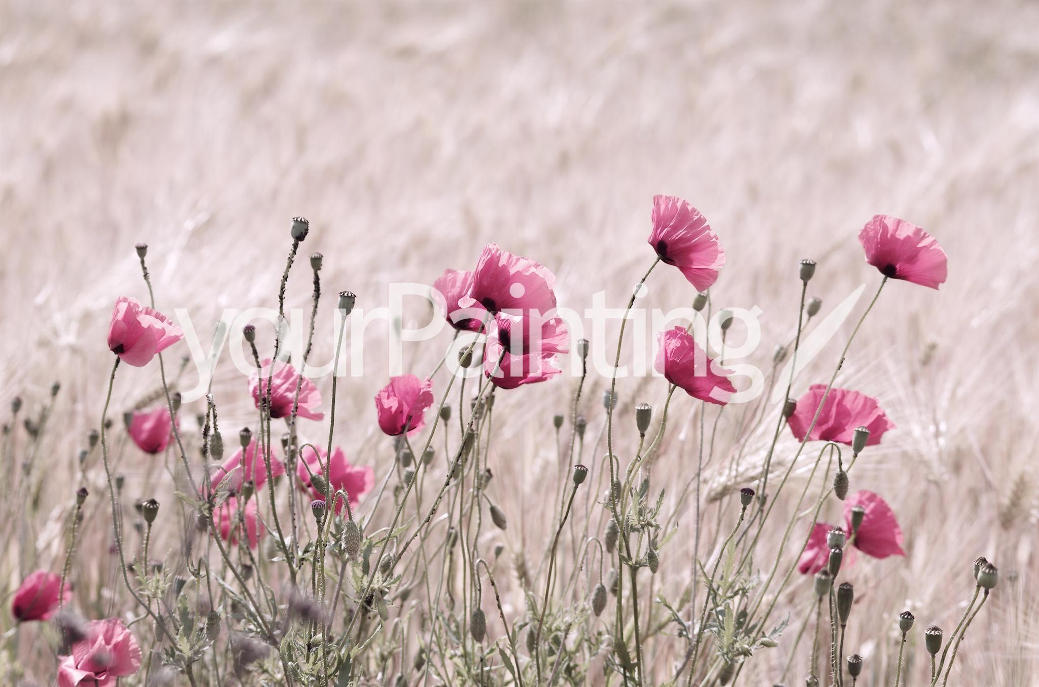 foto mohnblumen rosa - Google-Suche
