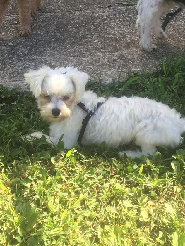 Adopt Jackie On Maltese Dogs Dogs Puppy Mill Rescue