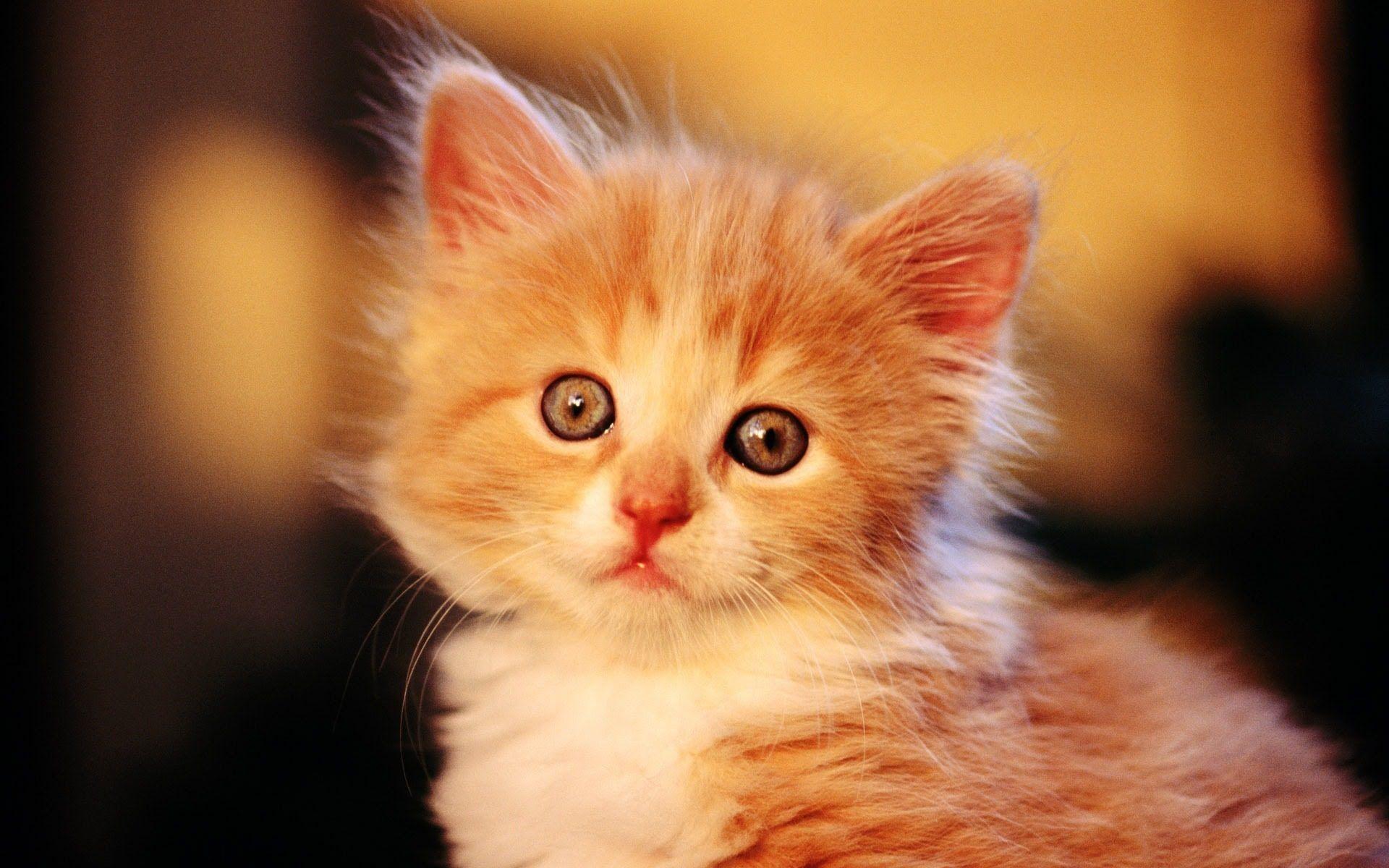 Best Cute Kittens Cats Video TOP 10 pilation 2015 NEW Too Cute