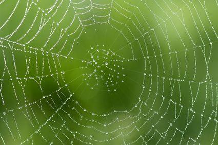 Gewohnheiten sind zuerst Spinnweben, dann Drähte.