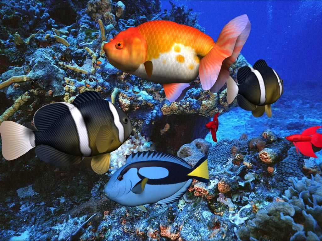 Fish aquarium screensaver - Free Aqua Screensaver A Very Beautiful Underwater Scene Which Helps To Relax The Scene Includes Many Different Species Of Fish It Also Includes Natural