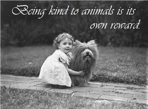 Pin By Julie Jordan On Animal Compassion Quotes