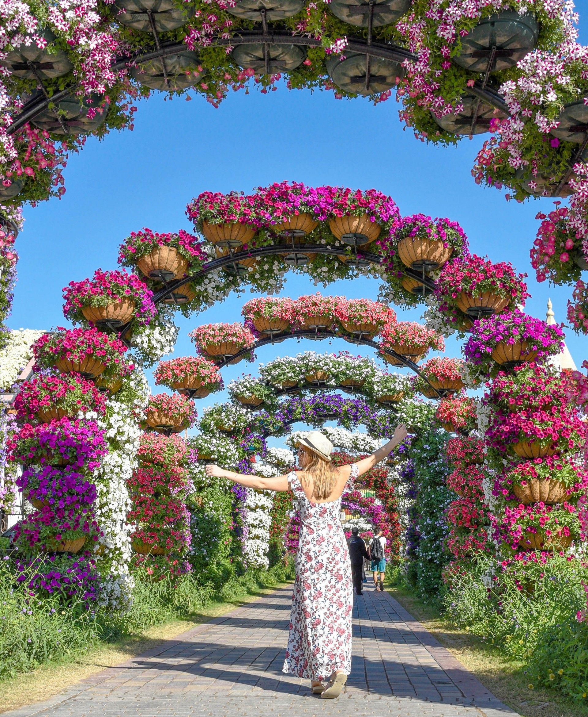 Dubai Miracle Garden Izkiz Miracle Garden Garden Soil Colorful Garden