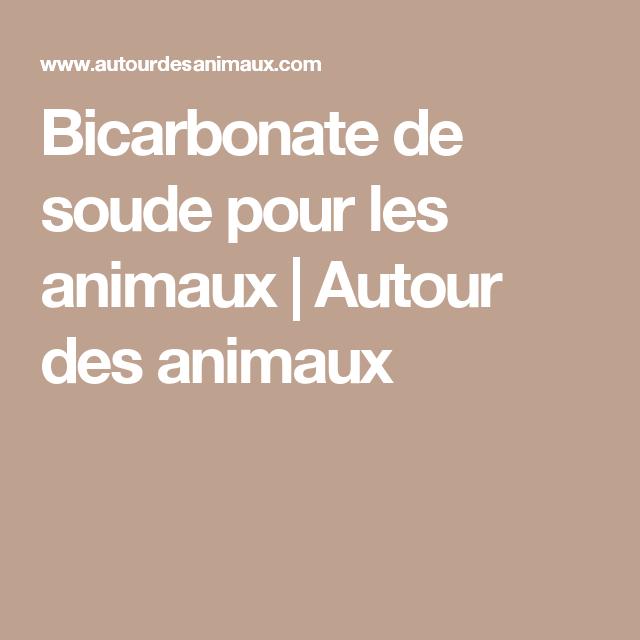 bicarbonate de soude pour les animaux autour des animaux animaux pinterest odeurs de. Black Bedroom Furniture Sets. Home Design Ideas