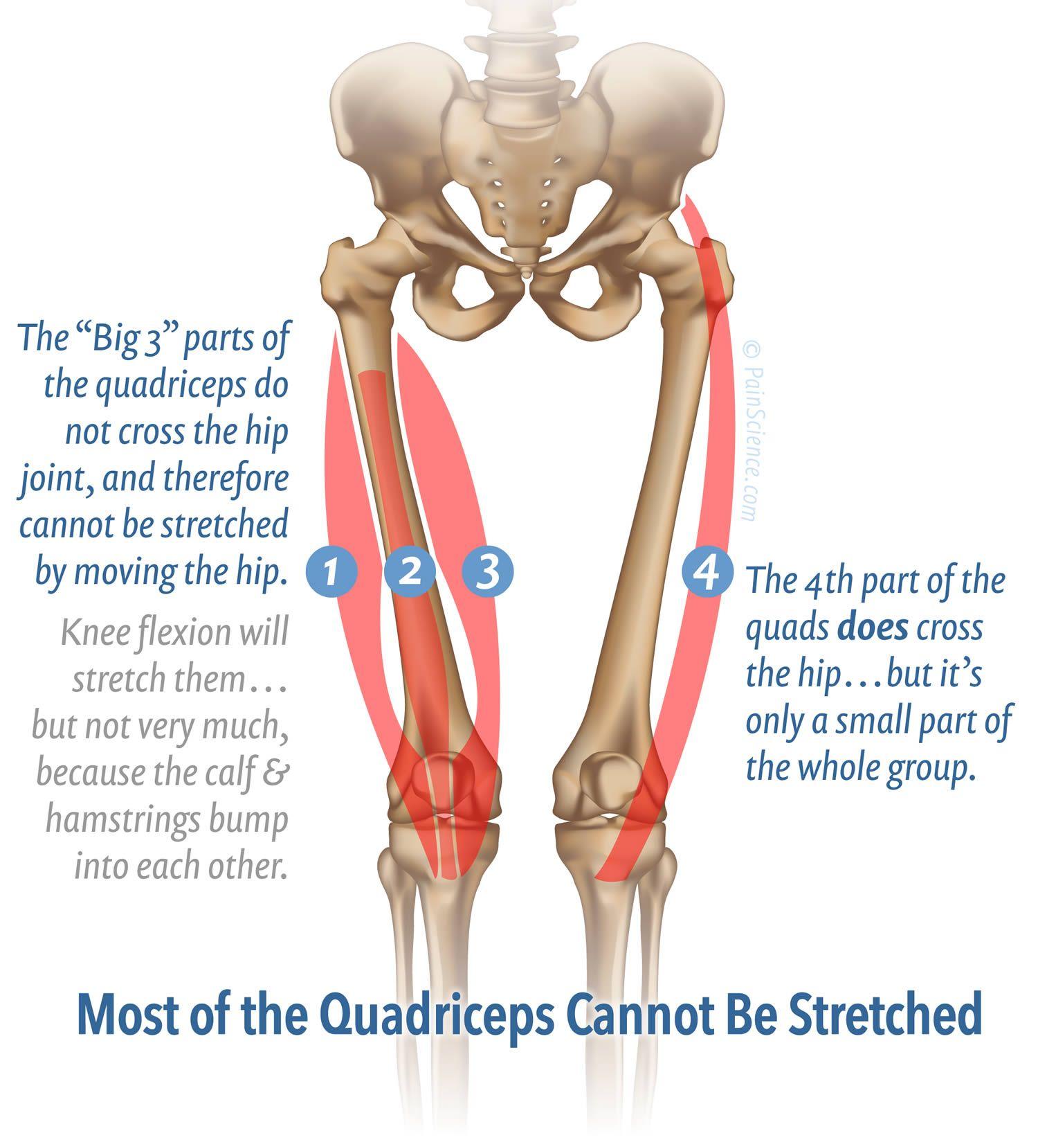 Massage Therapy for Your Quads   SUPERFICIAL FRONT LINE_LÍNEA ...
