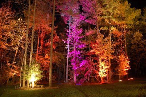 Ombre Lighting Uplighting Tree Uplighting Event Lighting